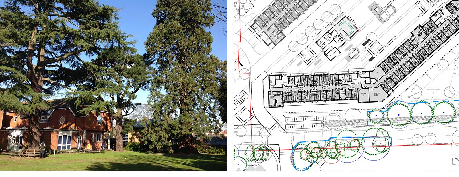 Mature trees and arboriculture planning chart
