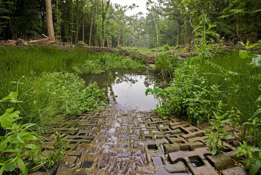 World Environment Day – A Focus on Ancient Woodland